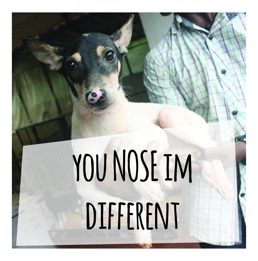 yOU nOSE IM DIFFERENT
