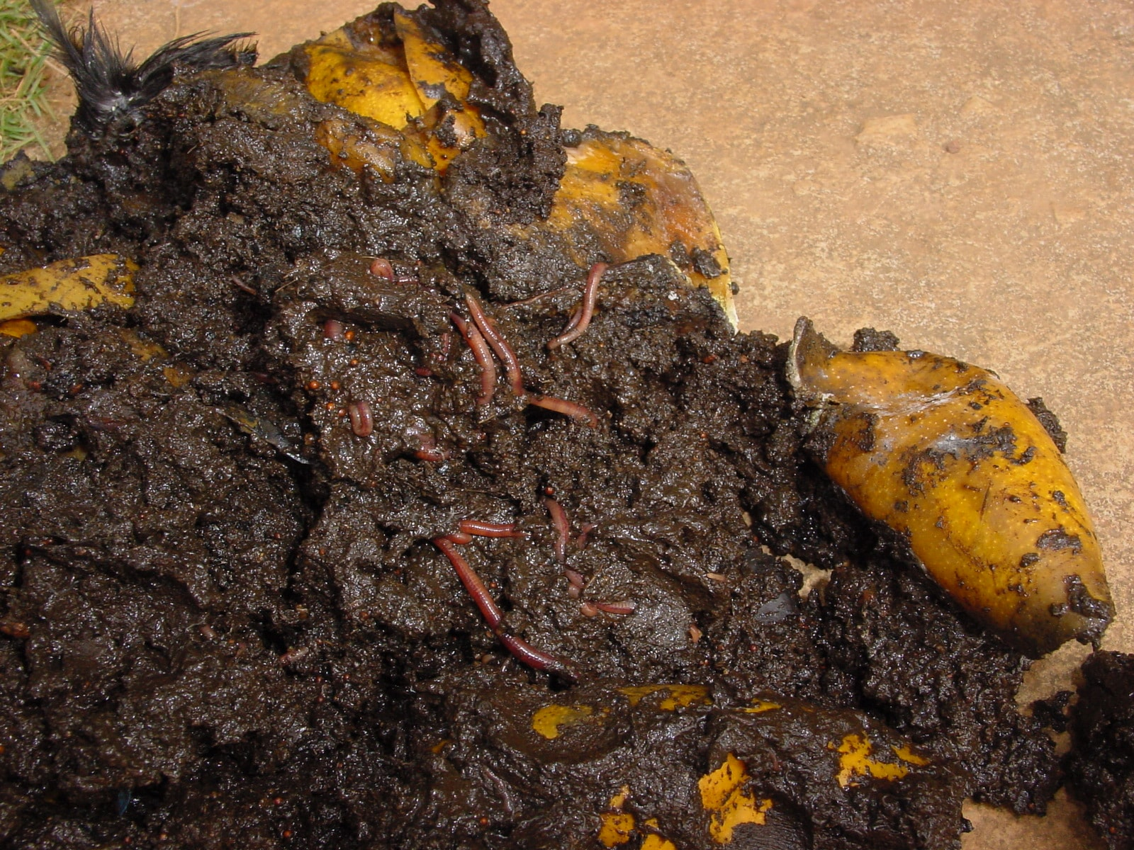 My first composting experience in 1999 copy-min